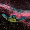 we could be in a turtle's dream in outer space