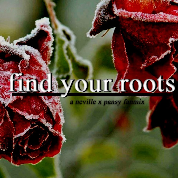 find your roots