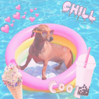 cool dog has chill day