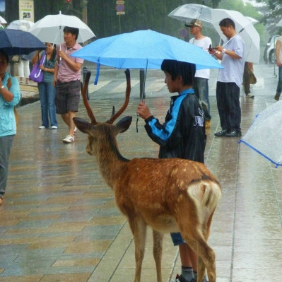 ☔ Man And Deer Friend Out In Rain ☔ playlist