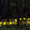 Watching The Fireflies