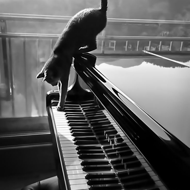 Eighty-Eight Keys to the Soul