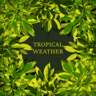TROPICAL WEATHER