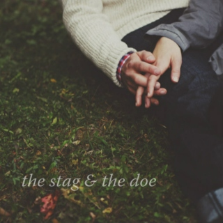 the stag & the doe