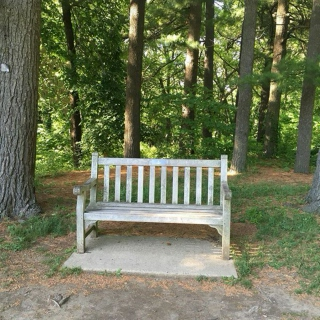 empty benches and blooming peonies