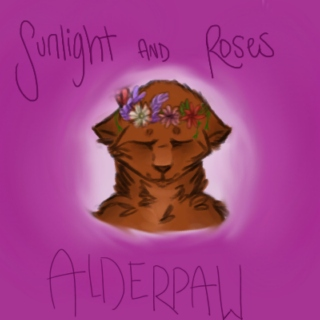 Sunlight And Roses // Alderpaw