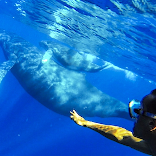 Ride With The Whales For Calming and Meditation