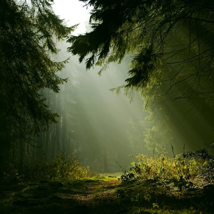 There's a place in the forest...