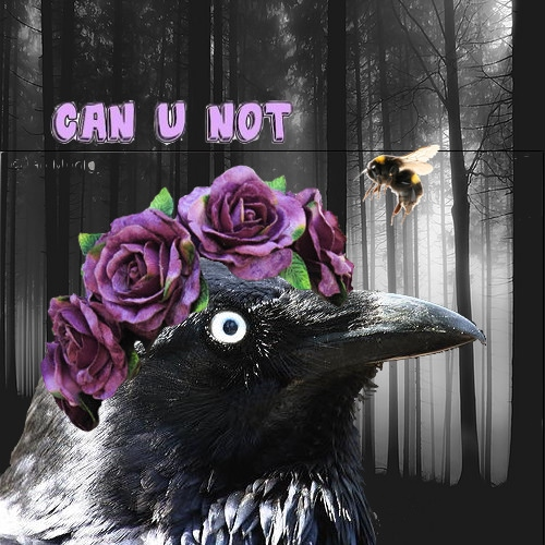 Sorry Not Sorry (A Raven Cycle Playlist)