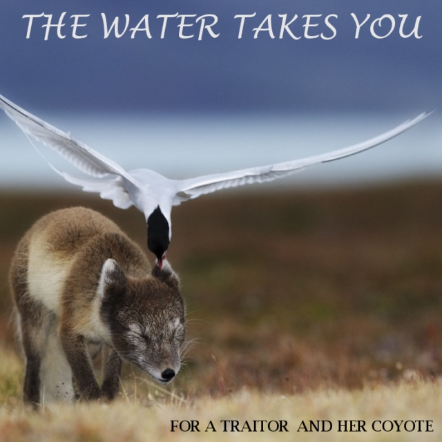 the water takes you