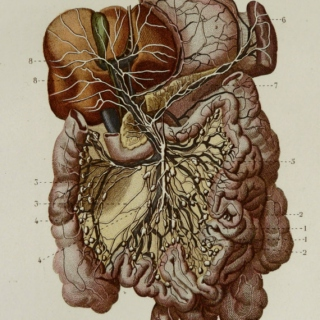 Gastrointestinal Tract - The study playlist