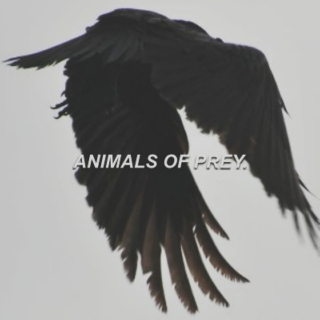 animals of prey