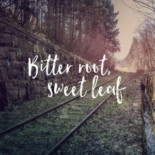 Bitter root, sweet leaf