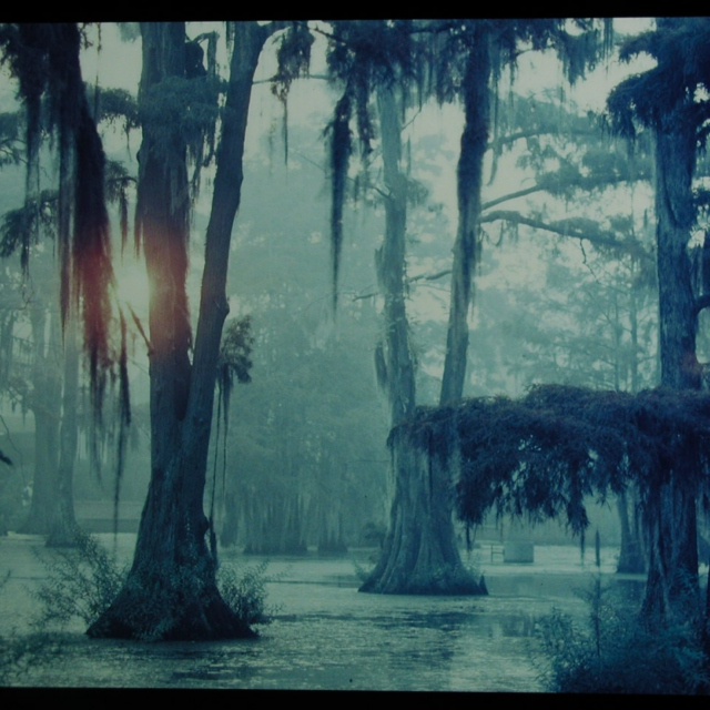 What Lurks in the Bayou