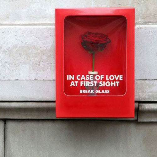 IN CASE OF LOVE AT FIRST SIGHT