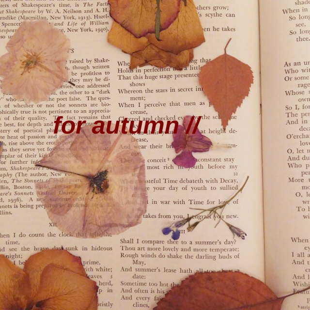 for autumn //