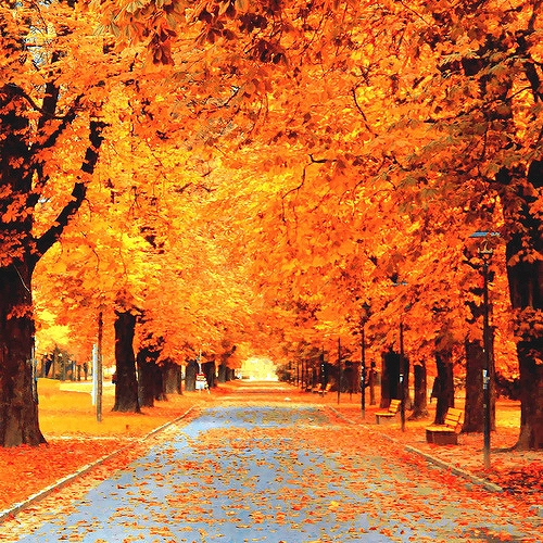 Falling for Autumn
