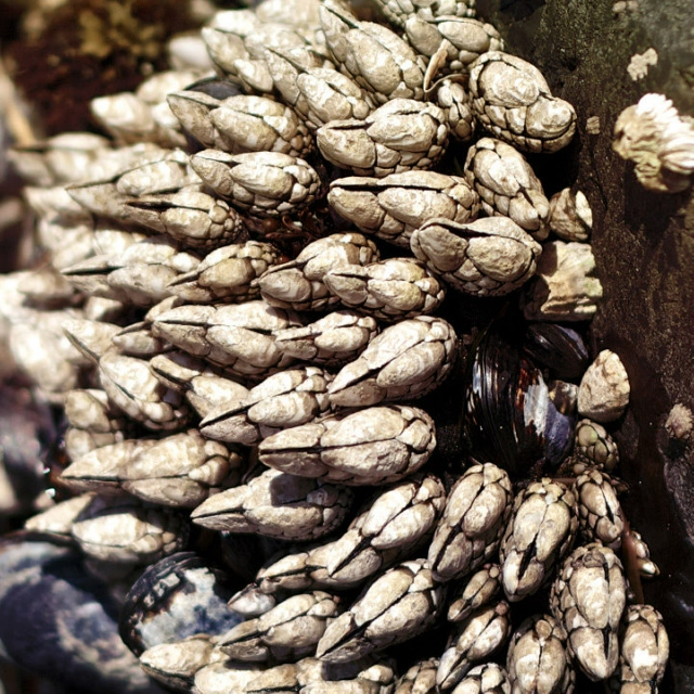 Brass Barnacles 09.07.16