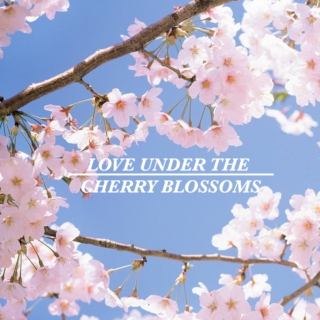 Love Under the Cherry Blossoms