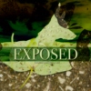 Exposed (Cooper's birthday mix)