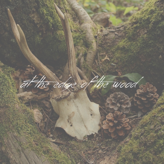 at the edge of the wood