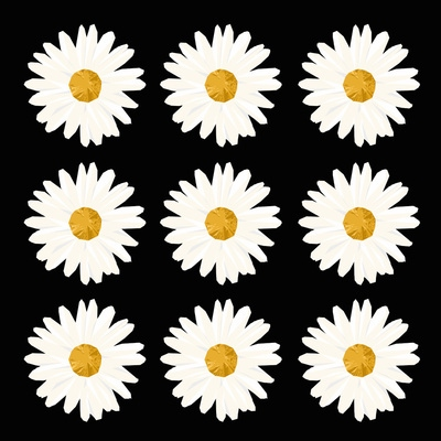 Dirt on Daisies