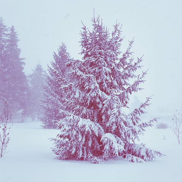 More Winter Solstice, Less Christmas