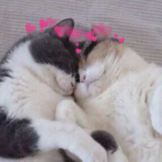 for my cat i'm not kitten about how much i LOVE YOU