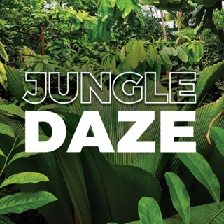 Jungle Daze