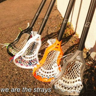 we are the strays
