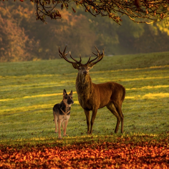 The Stag and the Dog