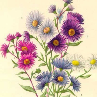 ☆ ASTER ☆
