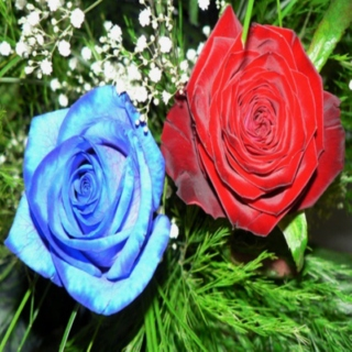 blue roses and bloody petals