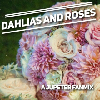 dahlias and roses