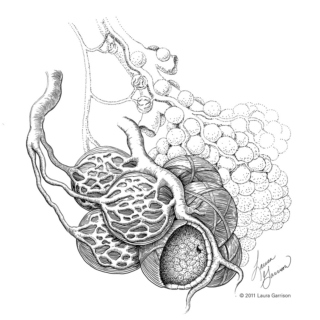 Alveoli - The anatomy study playlist