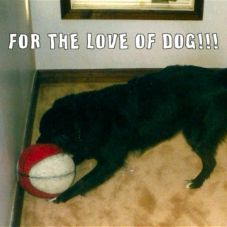 For The Love Of DOG!!!
