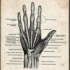 Carpal tunnel - The piano anatomy playlist