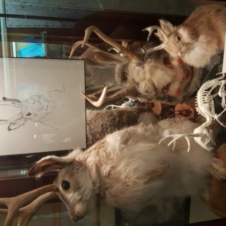 Jackalope Display-case