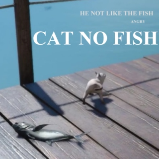 CAT NO FISH