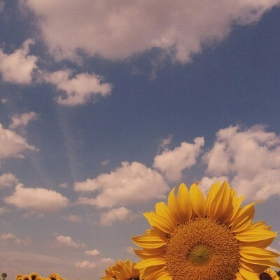 ☼ You're a sunflower! ☼