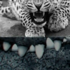 Teeth and Tails