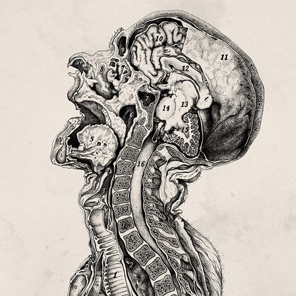 The anatomist's recharge - the medical study playlist