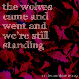the wolves came and went and we're still standing
